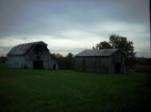 The last two barns left standing on my grandparent's farm