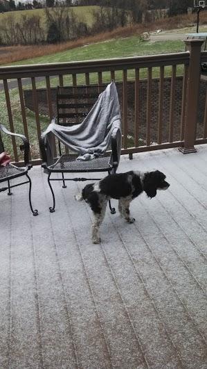 dog peeing on porch