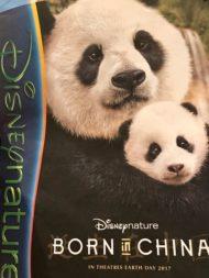 Born in China Panda