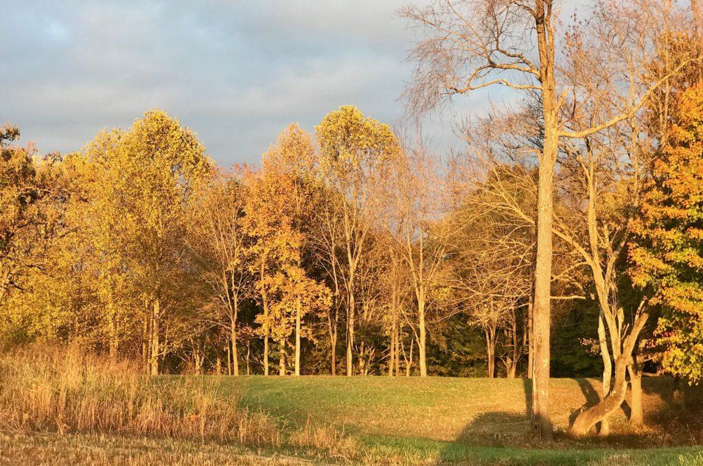 Kentucky's fall colors